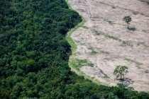 Petição em defesa da Amazônia tem mais de 600 mil assinaturas